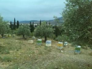 Hives4small